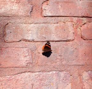 Jim's butterfly