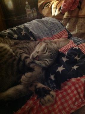 Charlie sleeping on John's quilt