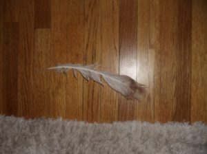 Crystal's Feather