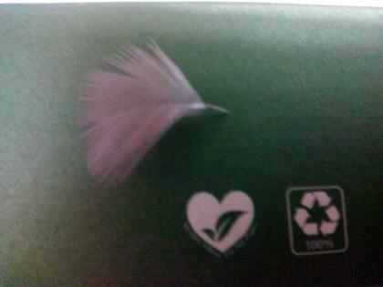 Sanjita's Feather